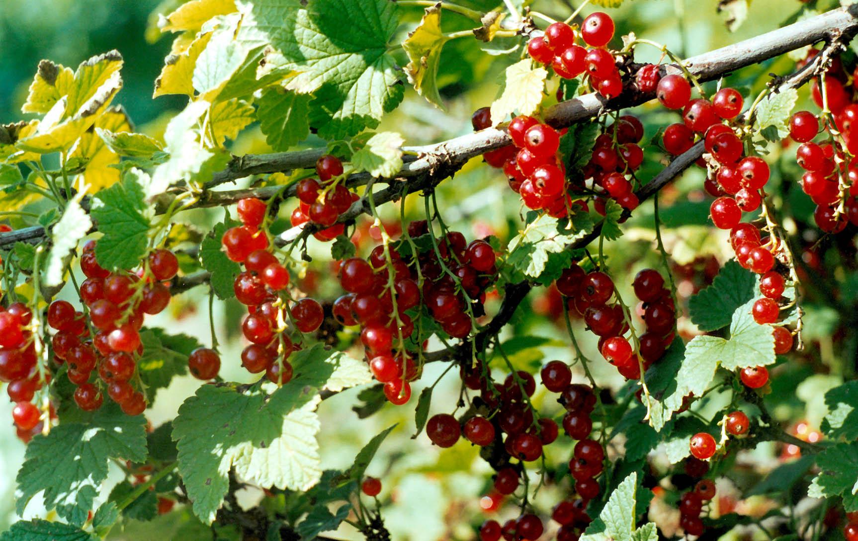 Растения из красной книги Адыгеи