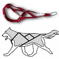 Шлейка для собак сделать своими руками