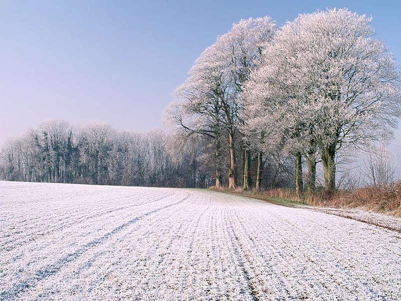 изображения зимы: