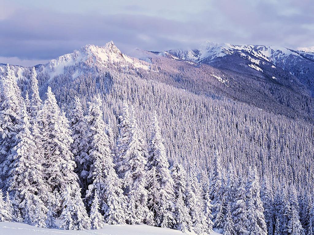 Лес зима пейзажи красивое фото зимы