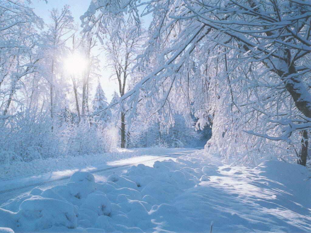 Фотообои природы зимние пейзажи фото