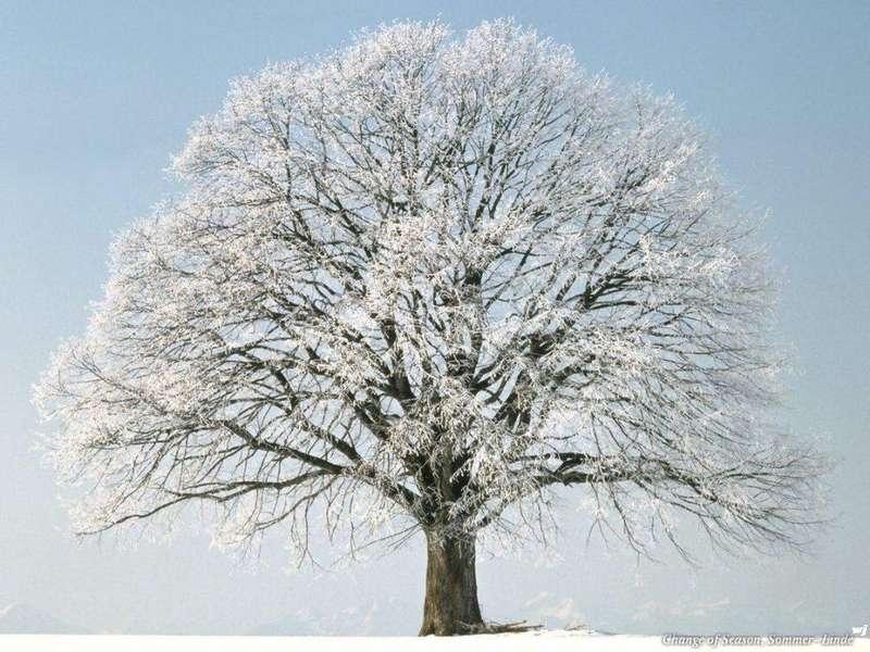 Зима фото природа зима обои фото зима