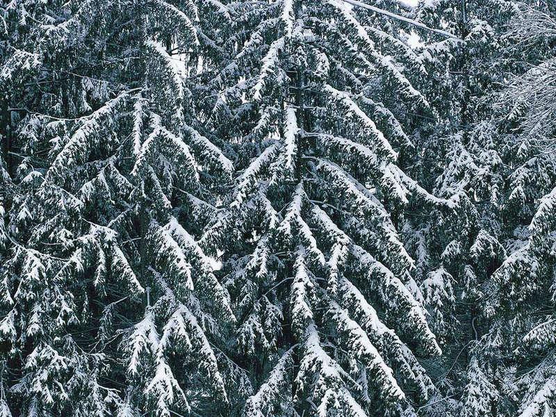 Фото зимний лес красивое фото зимы