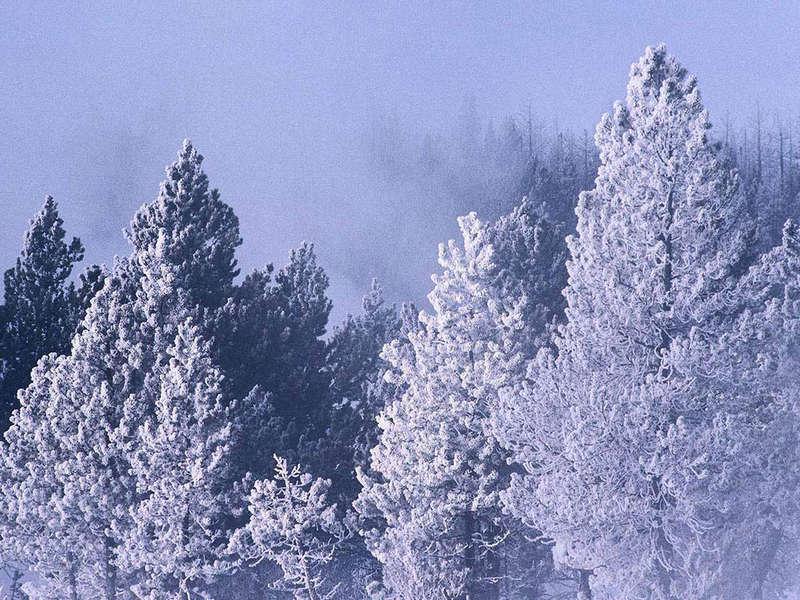 Зима (25 фото)