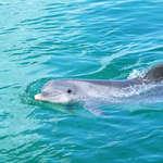 Dolphin (6)