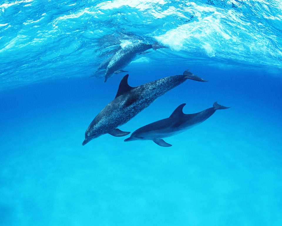 2007г год дельфинов: