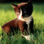 cats_5 (38)