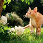 cats_5 (57)